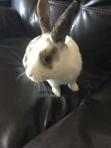 Bunny looking for new home - comes with everything