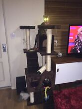 Cat scratching tower Carlisle Victoria Park Area Preview