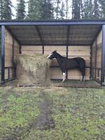 Horse shelters/ cow & calf shelters/ livestock shelters