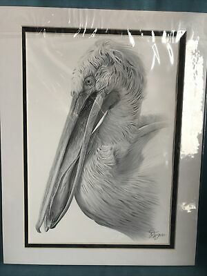 Pencil Drawing Pelican By Gary Tymon