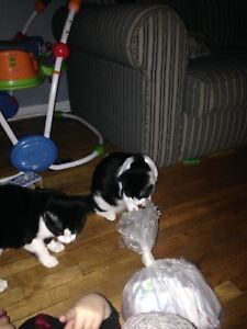 cats and kittens for free