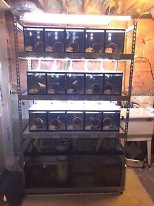 Broodstock Aquarium System