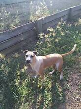 1.5 year old Willow is looking for a new home Upper Flagstone Lockyer Valley Preview