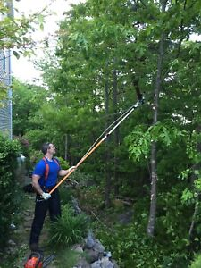 Tree Removal, Trimming, Limbing, etc. Specializing in Small Jobs
