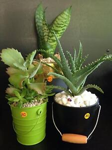 PLANTS - SUCCULENTS - TROPICALS - MINI GIFT POTS - MACRAME & MORE Wynnum West Brisbane South East Preview