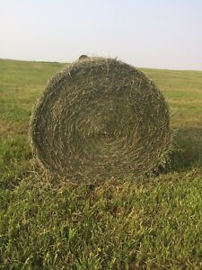 1st and 2nd Cut Hay, Wheat and Oat Straw, Small Square Straw.