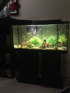 33 Gallon freshwater tank with matching stand