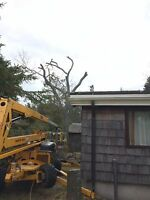 TREE REMOVAL 705-543-9574