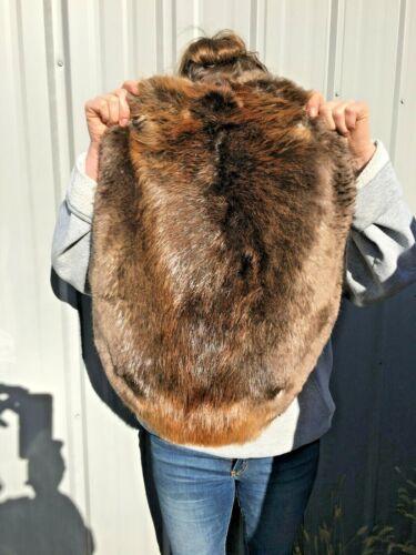 1 - Tanned Beaver pelt, Medium Grade grade prime, soft tanned, hide Beamg