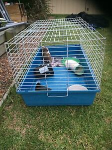 Rabbit/ guinea pig cage Maitland Maitland Area Preview