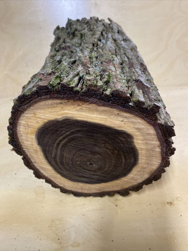 Black Walnut Log Pc 6 X11