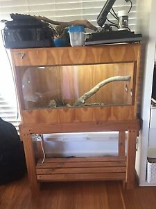 Reptile Snake Bearded Dragon Enclosure Cage Wamberal Gosford Area Preview