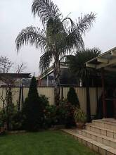 Large ornamental trees for sale Rowville Knox Area Preview