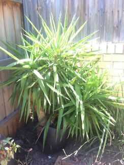 Spikey garden plant
