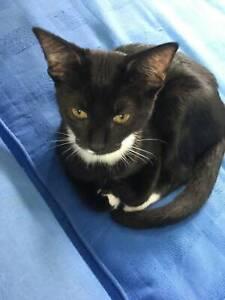 Rescue kitten for adoption