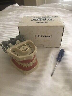 Original Columbia Dentoform Typodont Sm-pvr-860