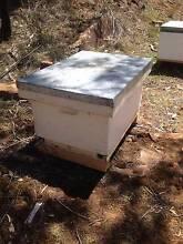 Nucleus bee hives Deviot West Tamar Preview