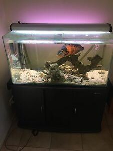 Fish Tank Ashmore Gold Coast City Preview