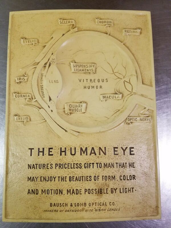 """Vintage Bausch & Lomb """"The Human Eye"""" Advertising Sign, Optical Anatomy Medical"""