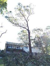 Jt,s TREE & STUMP REMOVAL ✳️ New Lambton Newcastle Area Preview