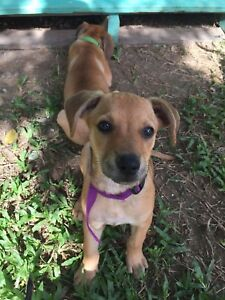 Meet Lexie! 8 week old female for adoption