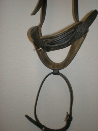 Black Padded Flash Noseband w/ Stainless Buckles- Horse Size