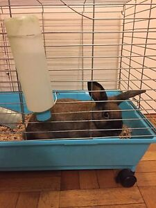 Bunny  with cage  free