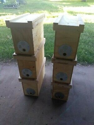 5 Frame Deep Nuc Box Swarm Trap Mating Nuc For Honey Bees