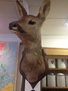 Din taxidermie