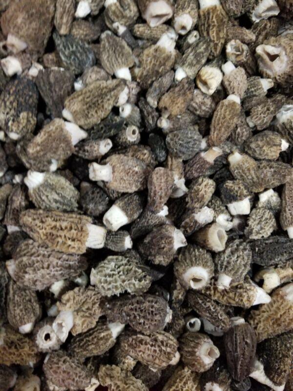 Fresh morel mushrooms Morelmasters  morels 2 pounds