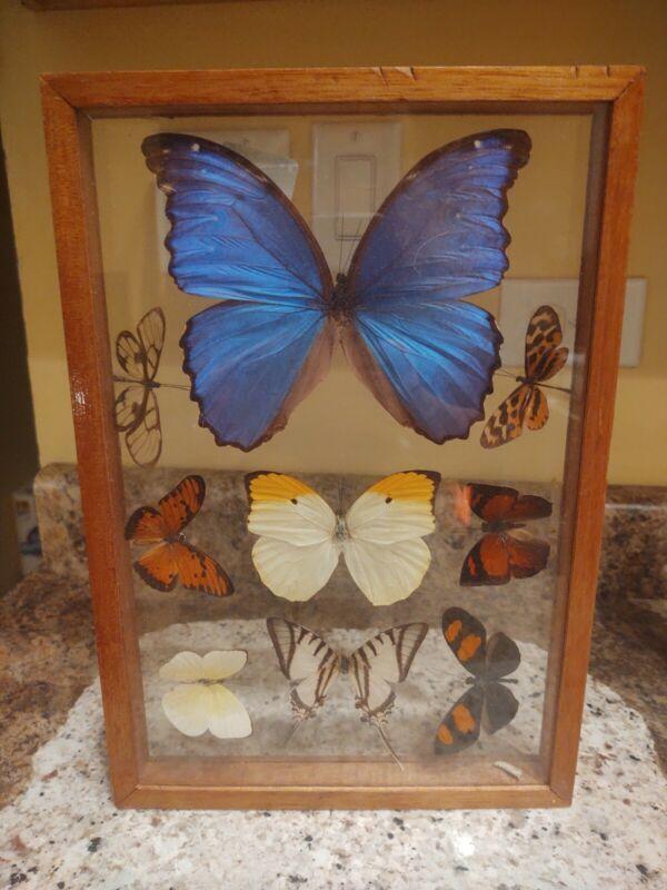 Vintage 9 Real Butterflies in Framed Glass Display