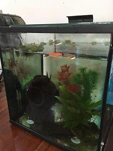 fish and fish tank all included Samford Valley Brisbane North West Preview