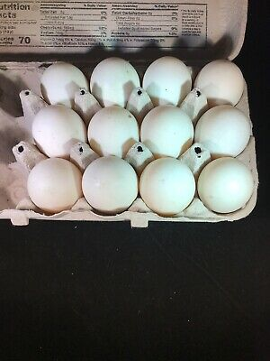 12 Duck Fertile Hatching Eggs Khaki Campbell Cayuga Ancona Mix