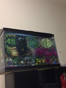 will rehome/trade community fish