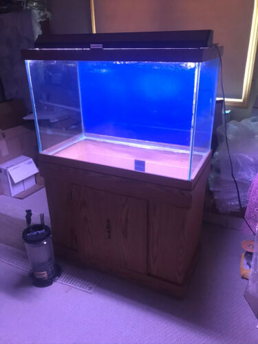 65 gallon fish tank with stand, hood, light and filter
