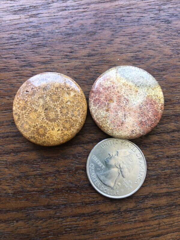 Old Stock Pair Of 2 Natural Chrysanthemum Coral Fossil 30mm Pendant bead