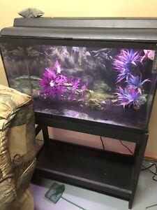 Aquarium 25 gallons avec deux axolotls de 3 ans