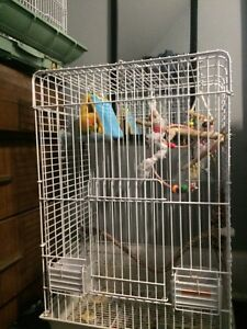 Bird/ parrot cage for sale!