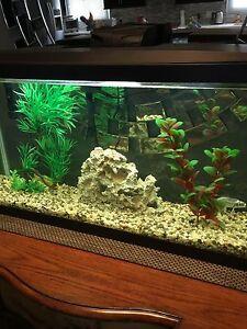 Beautiful Aquarium 17 gallon Kit