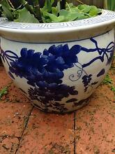 Chinese Water Bamboo & Chinese Ceramic Water Bowl Chatswood Willoughby Area Preview