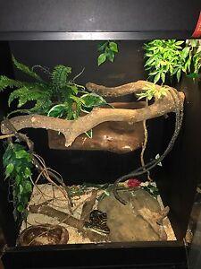 Reptile enclosure with python Grange Brisbane North West Preview