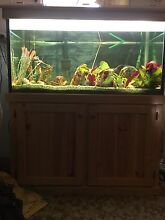 Aquarium 5ft x 4ft x 3ft Sutherland Sutherland Area Preview