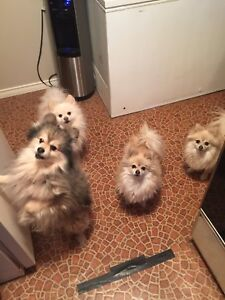 Looking for a pet/house sitter!