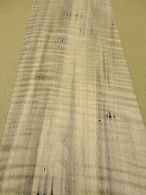 Maple Spalted Ambrosia Wormy Figured Fiddleback wood veneer 8