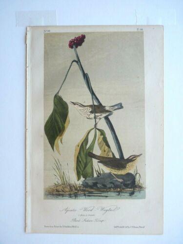 Aquatic Wood-Wagtail Audubon Color Print  1850s Octavo Edition Plate #149