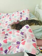 Lost our kitten grey tabby tuart hill Wonnerup Busselton Area Preview