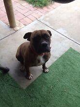 Missinggggggg my dog Semaphore Park Charles Sturt Area Preview