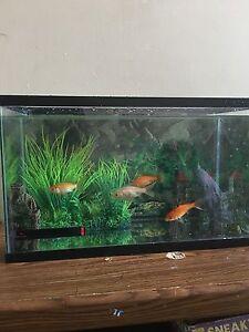 Fish tank  with 4 fish