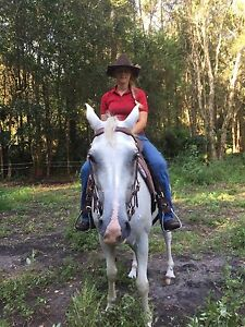 10yr old grey/white stock/Arab mare for sale Tuncurry Great Lakes Area Preview