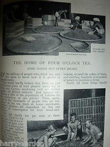 Rare-Old-Victorian-Antique-1898-Photo-Article-Tea-Plantations-Ceylon-India